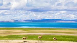 西藏色林措清新自然风光