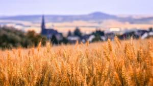 秋天的麦田景色图片
