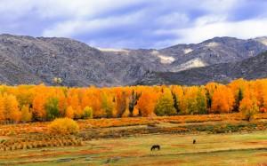 秋天唯美枫叶风景图片
