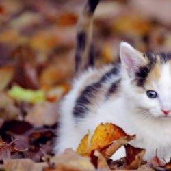 软萌治愈系可爱猫咪动物壁纸大全