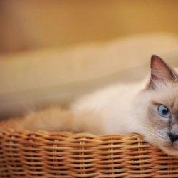 温驯可爱的猫咪桌面壁纸动物图片