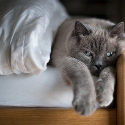 懒庸可爱猫咪动物高清图片大全