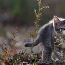 超萌可爱猫咪户外动物摄影图片